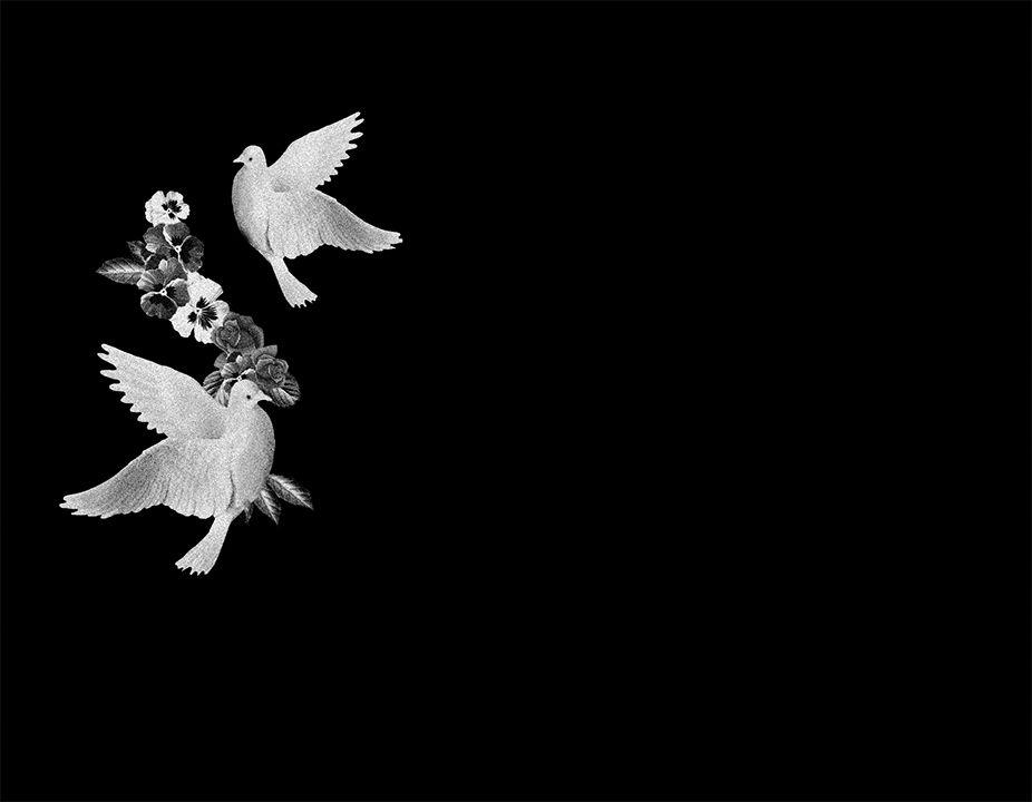 Flores y palomas láser