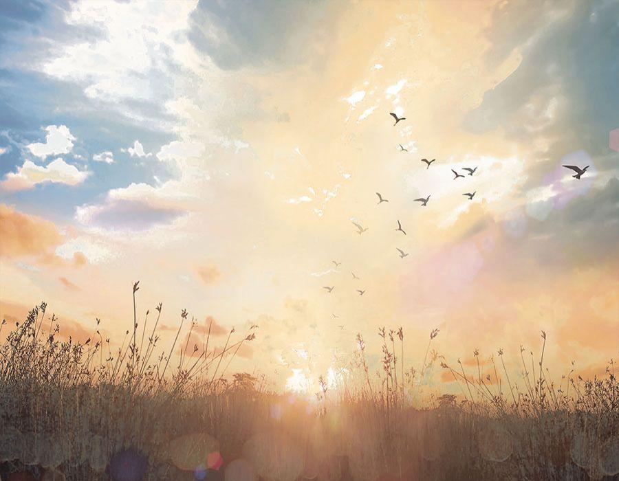 Puesta de sol en el campo