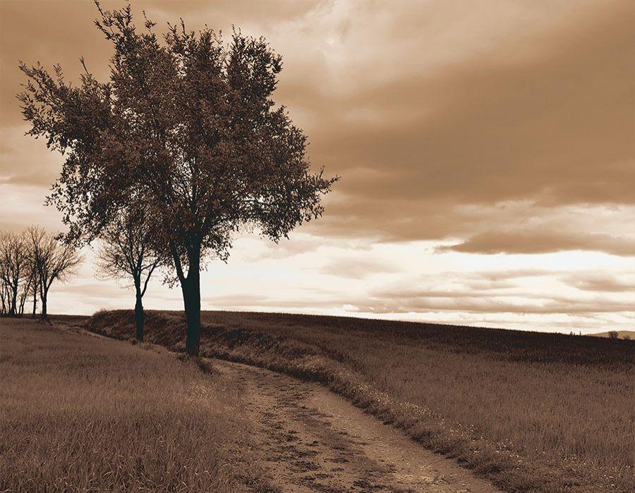 Paisaje camino con árbol en sepia