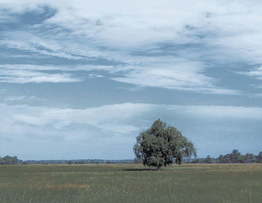 Paisaje con árbol