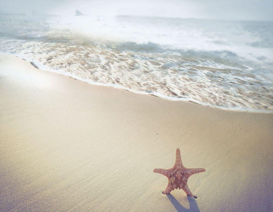 Orilla de playa con estrella de mar