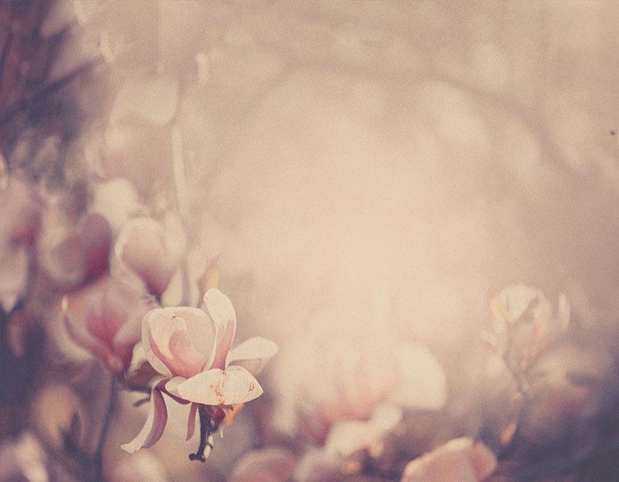 Fondo con flores en tonos ocres